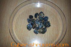 Truffles Panaeolus subbalteatus