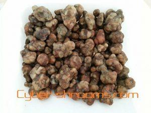 Magic truffels kopen
